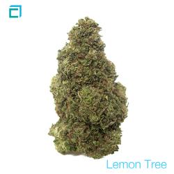 Thumb 8194 lemon tree