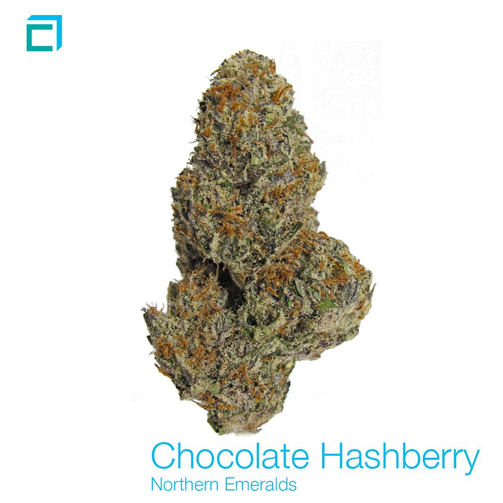 Chocolatehashberry