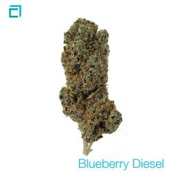 Thumb blueberry diesel
